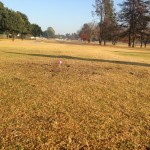 Benoni lake Golf Club's 10th Hole